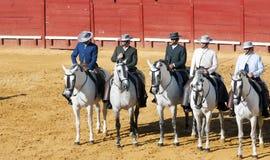 5 белых лошадей Стоковое фото RF