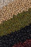 5 видов зерна. Стоковые Изображения