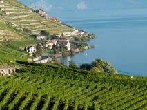 5 виноградников lavaux стоковое фото