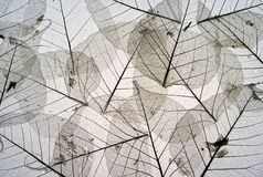 5 высушенных листьев Стоковые Фото