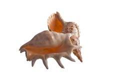 5 изолированных раковин Стоковая Фотография
