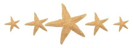 5 классифицируя starfish стоковое изображение
