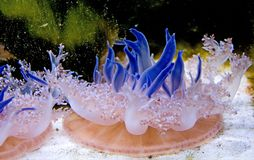 5 медуз Стоковые Фото