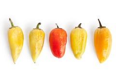 5 морщинок перца Стоковая Фотография RF