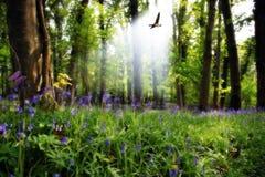 5 найденный рай Стоковая Фотография