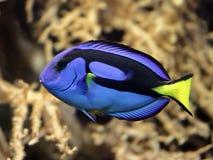 5 рыб тропических Стоковое Изображение