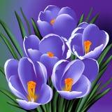 5 цветков иллюстрация вектора