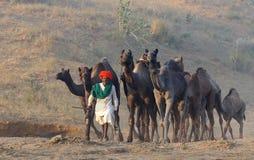 5 2009 kamel puskar ganska november Arkivfoto