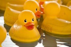 橡胶5只的鸭子 免版税库存照片