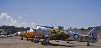 5 AT-6 norte-americanos Harvards Fotografia de Stock
