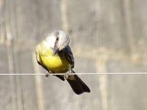鸟5 库存照片