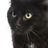 5 ans européens de shorthair de chat noir Images libres de droits