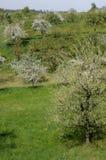 5 baden den blomstra fruktträdgården Arkivfoto