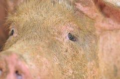5 bruka pigserie Arkivfoto