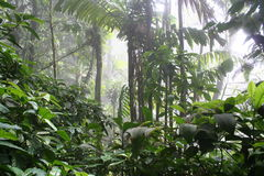 5 cloudforest tropicaux Photos stock