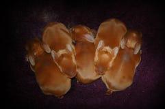 5 conigli del bambino Immagini Stock