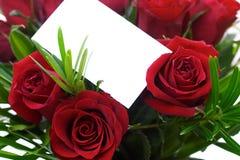 5 czerwona róża Obraz Stock