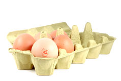 5 eggs in carton egg pack. Eggs in carton pack isolated on white background stock images