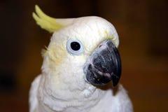 5 fåglar Arkivfoto