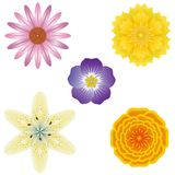 5 flower illustrations Stock Photography