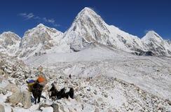 5 himalaya som trekking Royaltyfri Fotografi