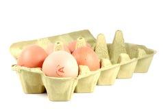 5 huevos en paquete del huevo del cartón Imagenes de archivo
