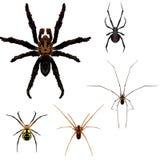 5 ilustrações da aranha Fotos de Stock