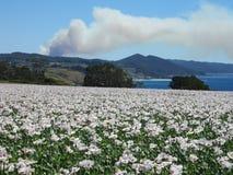 5 janvier 2013 : Pilier de fumée du feu de brousse, Tasmanie Images stock