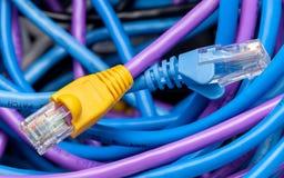 5 kabli kota kolorów wieloskładnikowych Zdjęcie Stock
