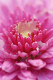 5 kwiat obraz stock
