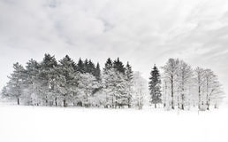 5 lasów zima Fotografia Royalty Free