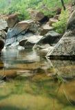 5 lasowych dzicy Fotografia Stock
