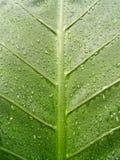 5 leaf water Στοκ Φωτογραφία