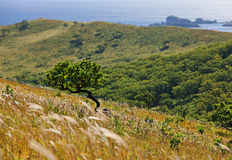 5 linii brzegowych drzewo Fotografia Royalty Free