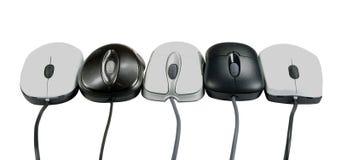 5 mouses Стоковые Изображения RF