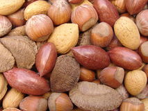 5 nuts раковин Стоковая Фотография RF