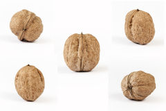 5 olika sikter av valnötter (serier) Arkivfoto