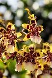 5 orchids ομορφιάς Στοκ Εικόνες