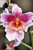 5 orchids royaltyfria foton
