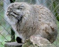 5 palas s кота Стоковая Фотография