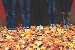 5 Person in Black and Blue Denim Jeans Standing on Maple Leaf during Daytime Royalty Free Stock Image