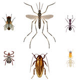 5 Pest insects Royalty Free Stock Images