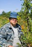 5 pomodori del giardiniere Immagine Stock Libera da Diritti