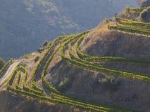 5 portowy dolinny wino Fotografia Royalty Free