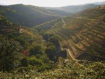 5 portowy dolinny wino Obrazy Stock