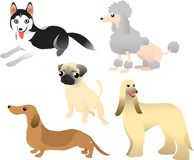 5 psów Zdjęcie Royalty Free