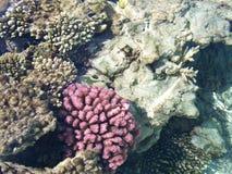 5 rafa koralowa Obrazy Royalty Free