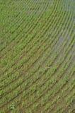 5 reflekterat riceskyvatten Arkivbilder
