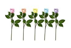 5 roses set Royalty Free Stock Image