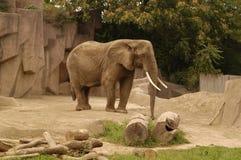5 słonia Zdjęcia Royalty Free